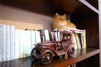 Kütüphanem.Kedim.Kitaplarım