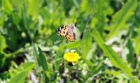 Butterfly Effect...