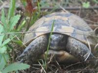 Kaplumbağaaaa :)