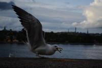 Kuşlar Gibi Yalnız Yapayalnızdım Açıkta...