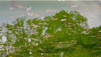 Göle Yansıma