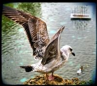 Uçun Kuşlar
