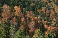 Doğa'nın Renkleri_5