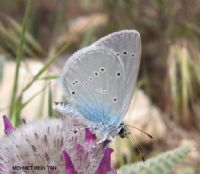 Mavi Kelebek 2010