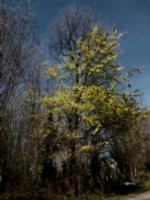 Ağaç Yaprakları