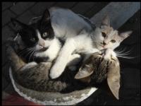 Ayvaz Parkı Kediler