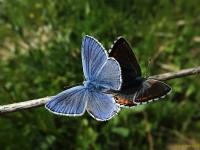 Kelebek Aşkı-2
