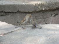 Yavru Kuş