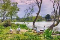 Nehirde Bahar