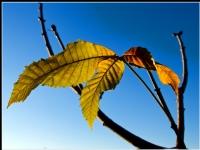Kasım Güneşi