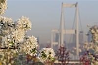 Bahar Ferahlığı Köprüsü