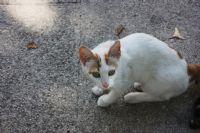 Sevimli Kedi