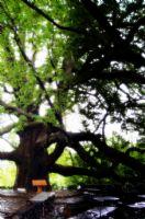 Yeşilin Gizemi
