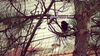 Ağacın Kenarında Saklanmış Gibi Duran Kuş