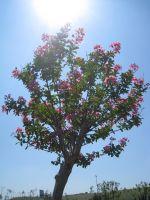 Ağaç Ve Güneşin  Mutluluğu
