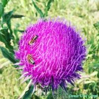 Arı Ve Çiçeğin Buluşması...