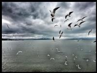 Simidi Yakalarken (beyşehir Gölü)
