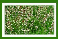 Yeşil - Beyaz