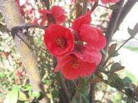 Bahar Güzelliği