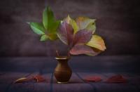 Sonbaharın Renkleri