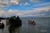 Manyas Gölü Manzaraları