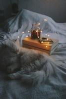 Kedi Keyfi