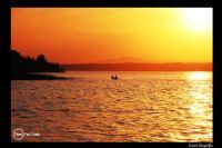 Balıkcıl