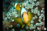 Kayıp Balık Bulundu :)