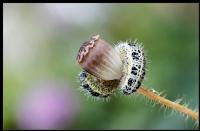 Bahar Gezintisi... - Fotoğraf: Şerafettin Çalışır