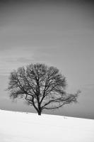 Yaşamak, Bir Ağaç Gibi