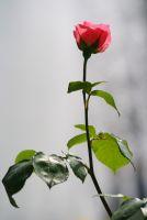 Baharın Gülleri 2