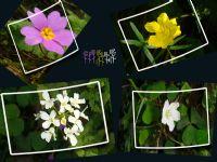 Çiçek Dolu Çerçeveler